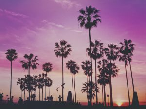 Monthly Car Rental Los Angeles: What to Expect